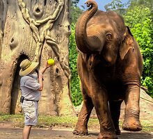 Elephant Dance by Shannon Rogers