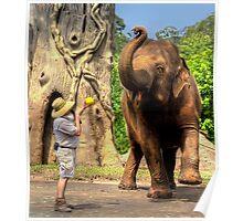 Elephant Dance Poster