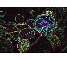Abstract Rose Photographic Print
