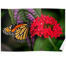 Monarch Butterfly - 10 Poster