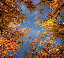 Fall Frame by Bob Larson