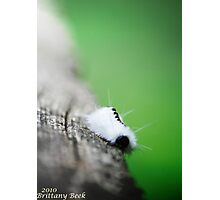 Little Fuzzy Creeper Photographic Print