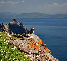 Skellig Island Nature Landscape With Puffin by upthebanner