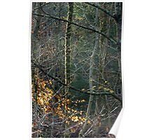 sun kissing a mossy tree Poster