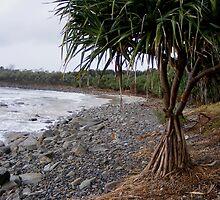 Convent Beach - Yamba - Pandanas tree by Sandy MacLean