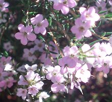 Diosma...A Tribute to Kat by SimplyRed