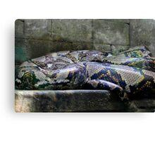 Sleeping Guardian Canvas Print
