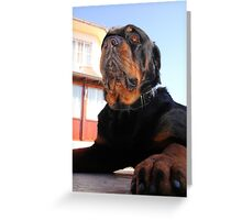 iPawd: Rottweiler Portrait Greeting Card