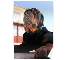 iPawd: Rottweiler Portrait Poster