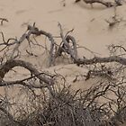 only twigs could be twisted on a beach... by byzantinehalo