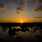 Sunset, New Forest by Nigel Ivy