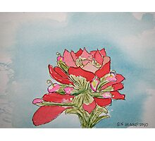 Indian Paintbrush pen and ink Photographic Print