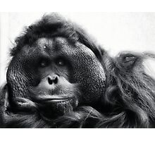 Tommy The Orangutan Photographic Print