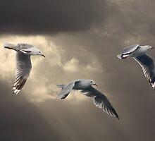 Heavens Gulls by byronbackyard