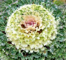 Decorative Cabbage Sticker