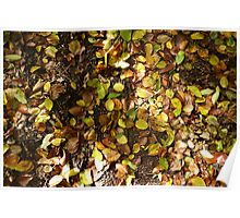 Autumn leaves on ground Poster