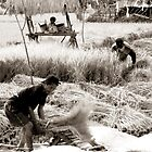 Rice Harvest by Komang