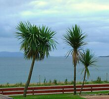 A Palm Grows In Scotland by artwhiz47