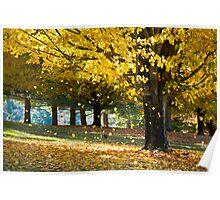 Wonderland - Autumn Maple Tree Leaf Storm Poster