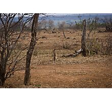 Jackal in the Veld Photographic Print