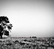 Field Of Empty Dreams by Jonathan Coe