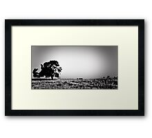Field Of Empty Dreams Framed Print