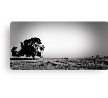 Field Of Empty Dreams Canvas Print