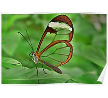 *GRETA OTO* *ESPEJITOS* *GLASSWING BUTTERFLY* Poster
