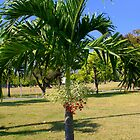 Palm Tree with Berries by Laurel Talabere