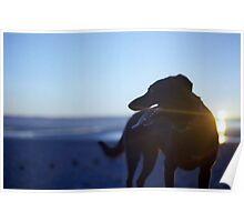 Shela at Sunset Poster