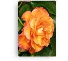 The Rose .. Orange Glory Canvas Print