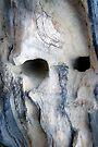 Blue Ghost by Gisele Bedard