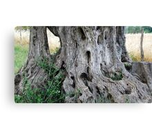 Old but Strong and Beautiful-Montalcino-Italy Canvas Print