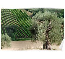 In a Tuscan Field-Montalcino-Tuscany Poster