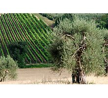 In a Tuscan Field-Montalcino-Tuscany Photographic Print