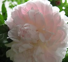 Peony Smile by MarianBendeth