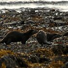 Autumwatch Otters by Jonathan Goddard