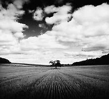 Oak in Wheatfield by Phill Jenkins