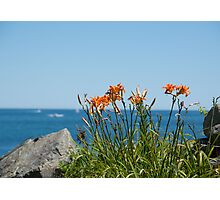 Wild Lillies Photographic Print