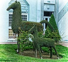 Horse Topiary by Ladydi
