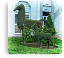 Horse Topiary Canvas Print