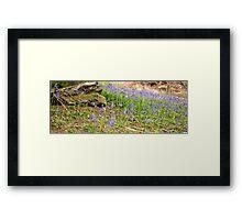 Bluebells in the spring Framed Print