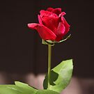 Rosebud by Heather Friedman