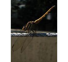 Yellow Dragon Photographic Print