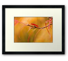 Inclined to Rest Framed Print