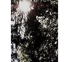 Sunlight in the Hoh Photographic Print