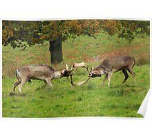 Fallow deer FIGHT!!!!!! Poster