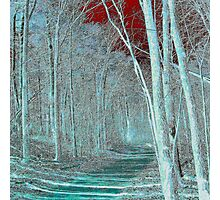 Blue forest walk Photographic Print
