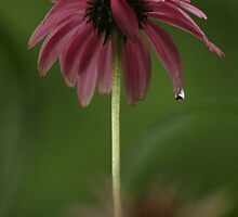 Feeling Lonely on a Rainy Day by Carole Brunet