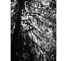 Silouette  Photographic Print
